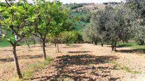 terreno agricolo in vendita a Potenza Picena frazione casette antonelli agenzia immobiliare parigi snc 01