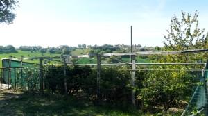 terreno agricolo in vendita a Potenza Picena frazione casette antonelli agenzia immobiliare parigi snc 03