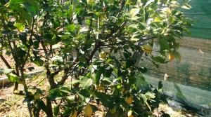 terreno agricolo in vendita a Potenza Picena frazione casette antonelli agenzia immobiliare parigi snc 08